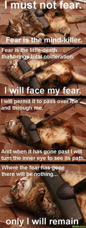 fear is the mind killer cat